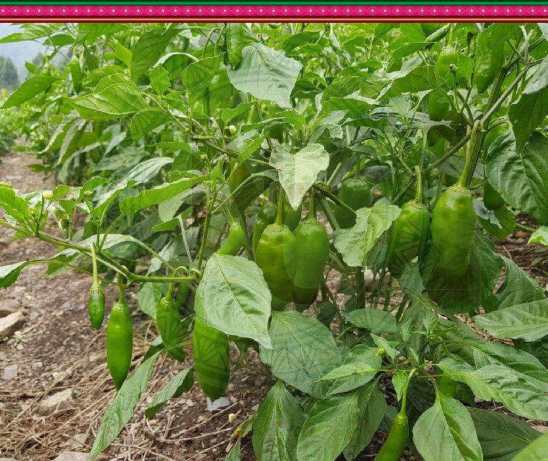 Productora, comercializadora y agroexportadora
